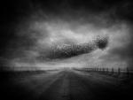 Angela Bacon-Kidwell: Late December, 2013