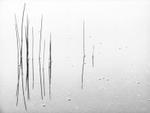 David H. Gibson: Reeds #6, Colorado Rocky Mountains, 2005