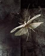 Jo Whaley: Orthoptera