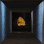 Kate Breakey: Common Sulfur Butterfly