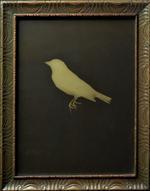 Kate Breakey: Goldfinch