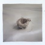 Kate Breakey: Nest 23