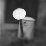 Keith Carter: Watering Can