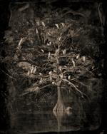 Keith Carter: Nesting Tree #1, 2013