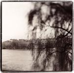 Keith Carter: Oldest Tree In Paris, 1999