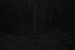 Ken Rosenthal: Evanescent