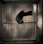 Kindred Spirits: Keith Carter – Bird in Cage, 2017