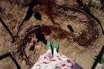 Laurie Tümer: Gourd Garden in Spring, 2000