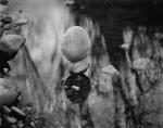 Elvira Piedra: Floating Stones, El Rito, 2001