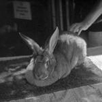 Meg Birnbaum: Petting Zoo 2, 2008