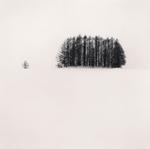Michael Kenna: Copse and Tree, Mita, Hokkaido, Japan, 2007