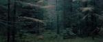 Michael Lange: WALD | Landscapes of Memory #0576