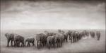 Nick Brandt: Elephant Journey to Water, Amboseli, 2008