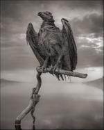Nick Brandt: Calcified Fish Eagle, Lake Natron, 2012