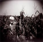 Perry Dilbeck: Corn Harvest, 1998