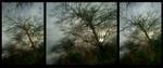 Susannah Hays: Fractal Tree