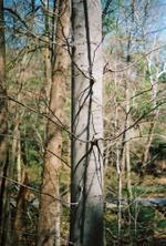 Terri Weifenbach: Woods 13, 2009