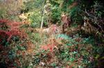 Terri Weifenbach: Woods II 29, 2010
