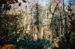 Terri Weifenbach: Woods 05, 2009