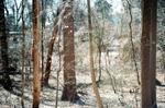 Terri Weifenbach: Woods 12, 2010