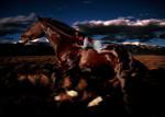 Tom Chambers: Summer Night Ride, 2000