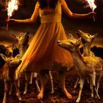 Tom Chambers: Burn to Shine