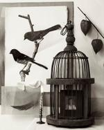 Zoë Zimmerman: Two Birds Cage, 2006